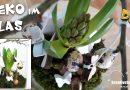DIY Deko im Glas für Frühling | Ostern | Geschenkidee | Tischdeko | mit Blumen, Moos, Traumfänger